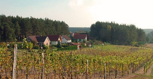 Polske_vinavlere_får_det_lettere