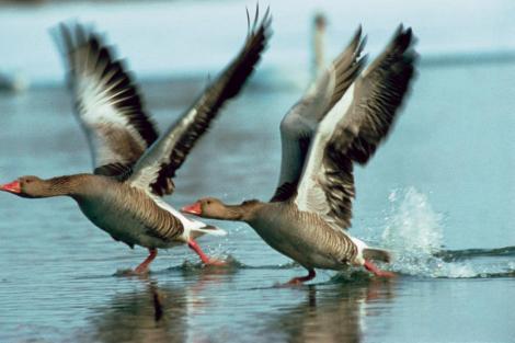 ns-dyreliv-t__ller-mange-sj__ldne-fuglearter