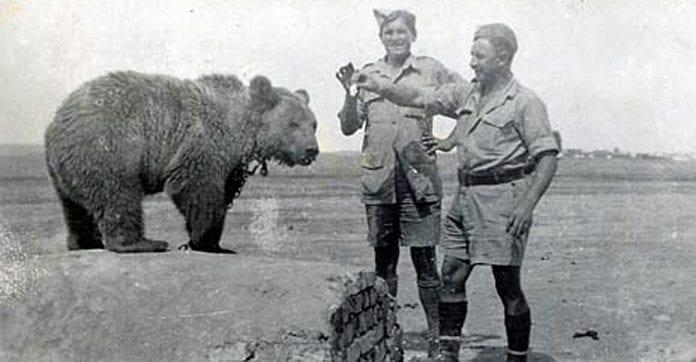 soldaterbjørnen_Wojtek