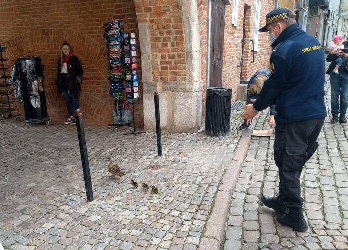 Corona politiet i Gdansk slår til